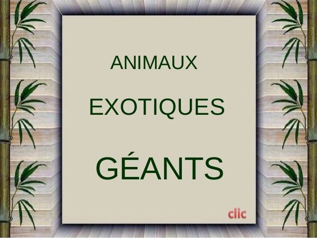 Animaux exotiques-geants-diana1