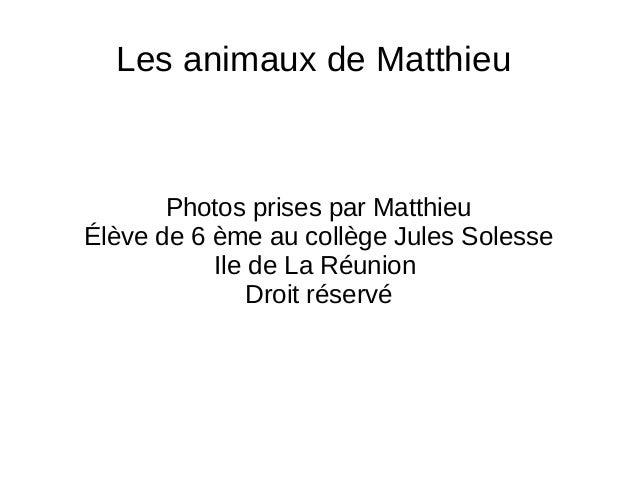 Les animaux de Matthieu Photos prises par Matthieu Élève de 6 ème au collège Jules Solesse Ile de La Réunion Droit réservé