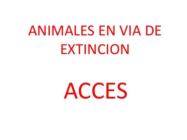 ANIMALES EN VIA DE EXTINCION  ACCES