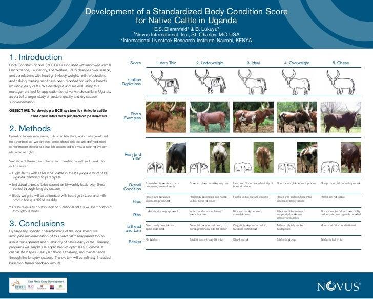 Development of a standardized body condition score for native cattle in Uganda