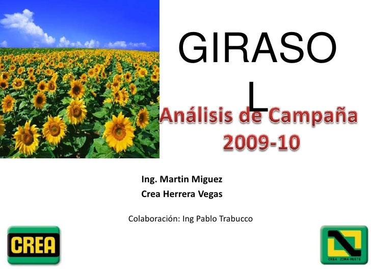 Análisis de Campaña Girasol 09-10