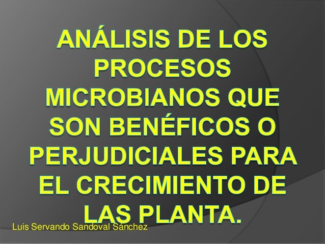 Análisis de los procesos microbianos que son benéficos