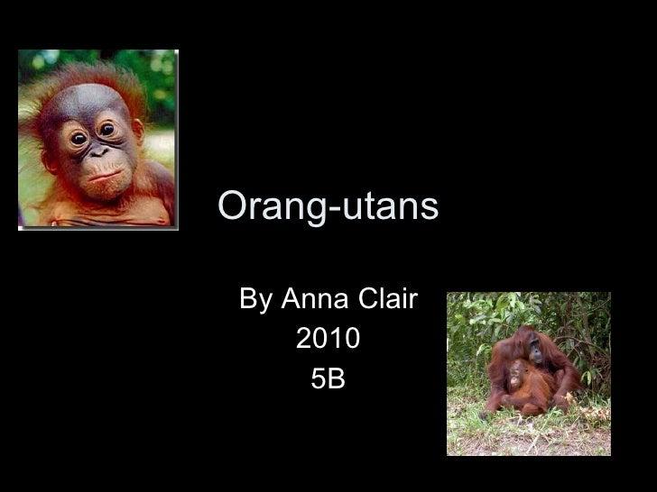 Orang-utans By Anna Clair 2010 5B