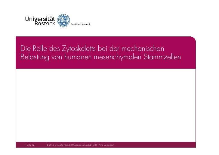 """Anne Langenbach: """"Die Rolle des Zytoskeletts bei der mechanischen Belastung von humanen mesenchymalen Stammzellen"""""""