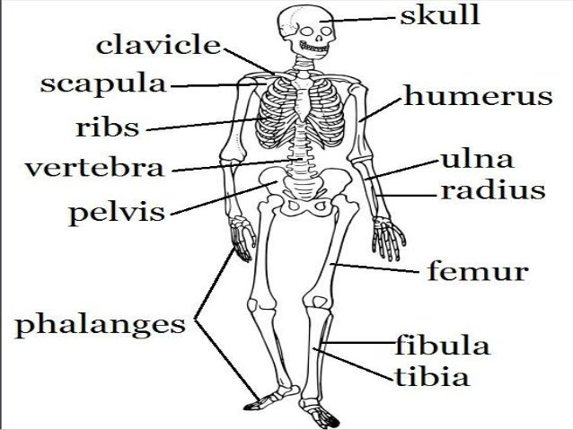 search results for  u201clabel parts of the body worksheet