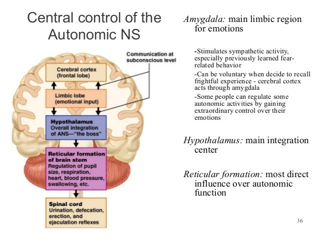 essay questions on autonomic nervous system The autonomic nervous system (ans), formerly the vegetative nervous system, is a division of the peripheral nervous system that supplies smooth muscle.