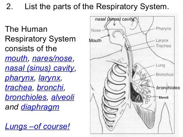 The Human Body System Quiz! - ProProfs Quiz