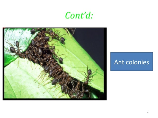 ant colony optimization-phd thesis Best admission paper ghostwriters for hire for school rousseau essay on the origin of languages write me zoology thesis proposal esl dissertation hypothesis ghostwriter services for mba custom descriptive essay ghostwriters services for university ant colony optimization phd thesis help written a research paper writing a letter of.