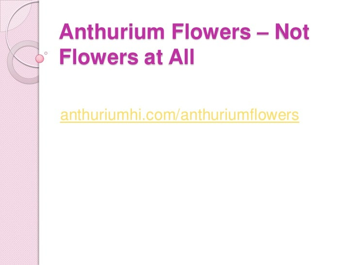 Anthurium flowers – not flowers at all
