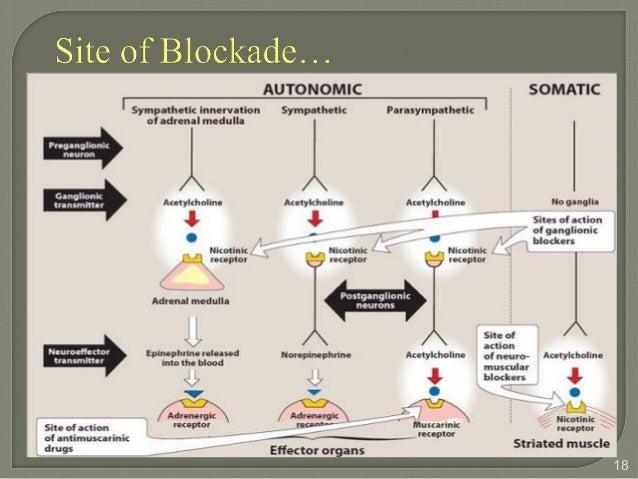 scopolamine mechanism of action pdf