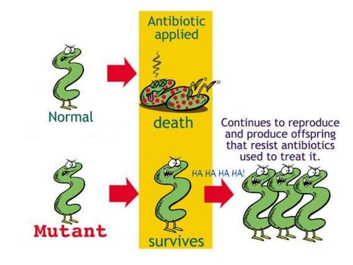 Antibiotics Natural Selection