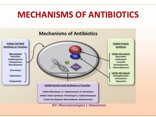 Lactobacillus uti cipro dosages