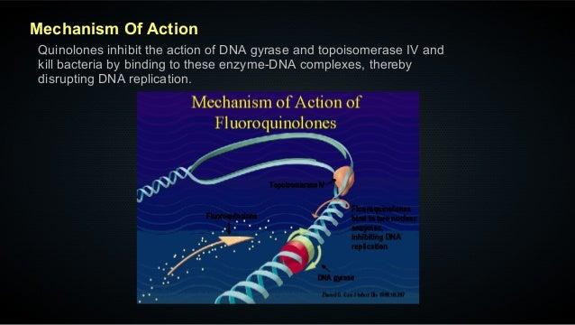 Action Of Ciprofloxacin