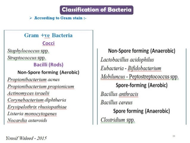 a classification of bacteria Introduction, bacterial classification & immunology review different from parasites and fungi (eukaryotic) bacterial classification.