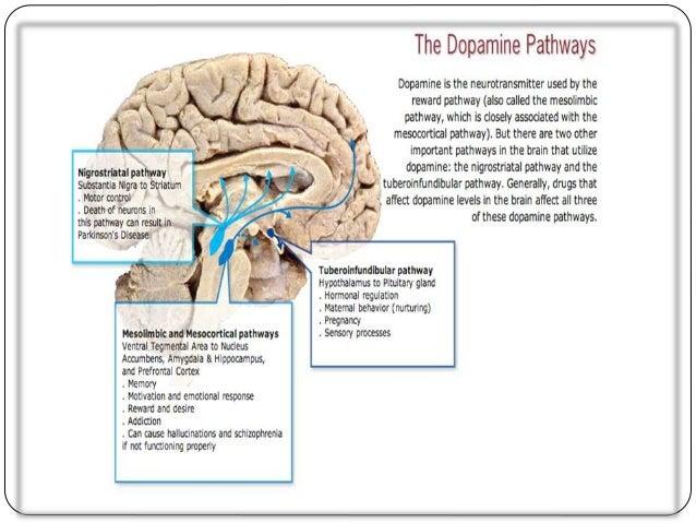 schizophrenia and the brain essay