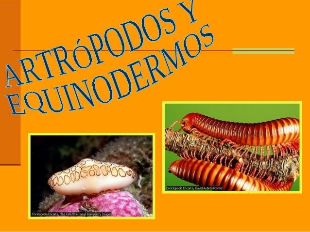 ÍNDICE 1-PHYLUM ARTRÓPODOS   1.1-MIRIÁPODOS   1.2-ARÁCNIDOS   1.3-INSECTOS   1.4-CRUSTÁCEOS 2-PHYLUM EQUINODERMOS