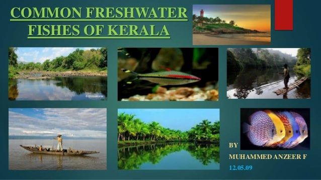 COMMON FRESHWATER FISHES OF KERALA  BY MUHAMMED ANZEER F 12.05.09