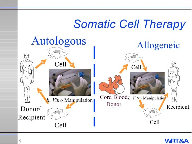 """Gene Therapy / Cell Therapy / Stem Cells – Regulations for the """"New ..."""