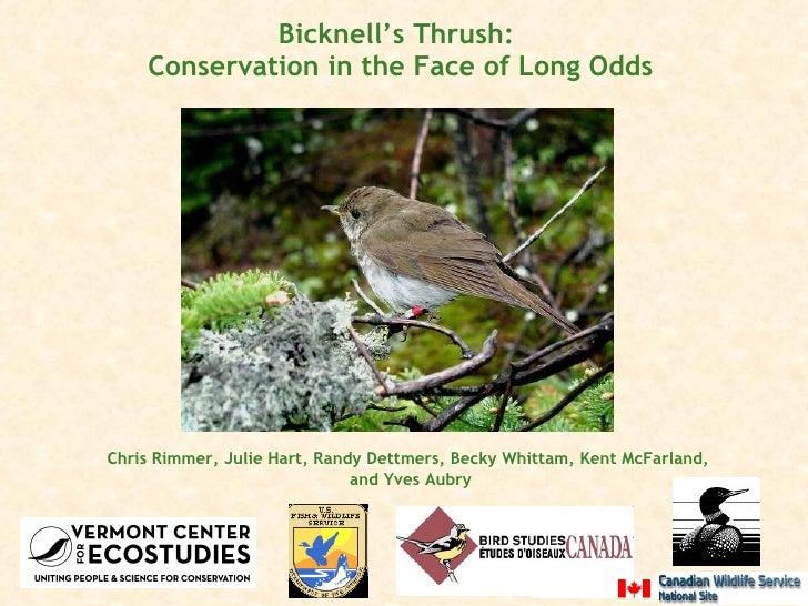Bicknell's Thrush:  Conservation in the Face of Long Odds <ul><li>Chris Rimmer, Julie Hart, Randy Dettmers, Becky Whittam,...