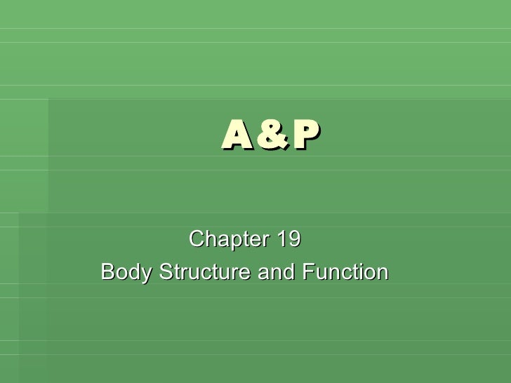 A&P Chapter 19 Body Structure and Function