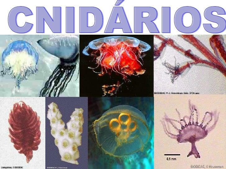 Ap biologia