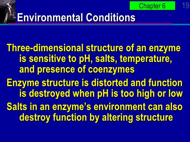 the structure and function of an enzyme 1 science 1974 nov 29186(4166):790-7 dna ligase: structure, mechanism, and function lehman ir dna ligase of e coli is a polypeptide of molecular weight 75,000 the comparable t4-induced enzyme is somewhat smaller (63.