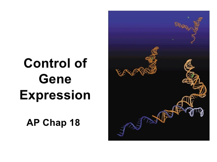 Control of Gene Expression AP Chap 18