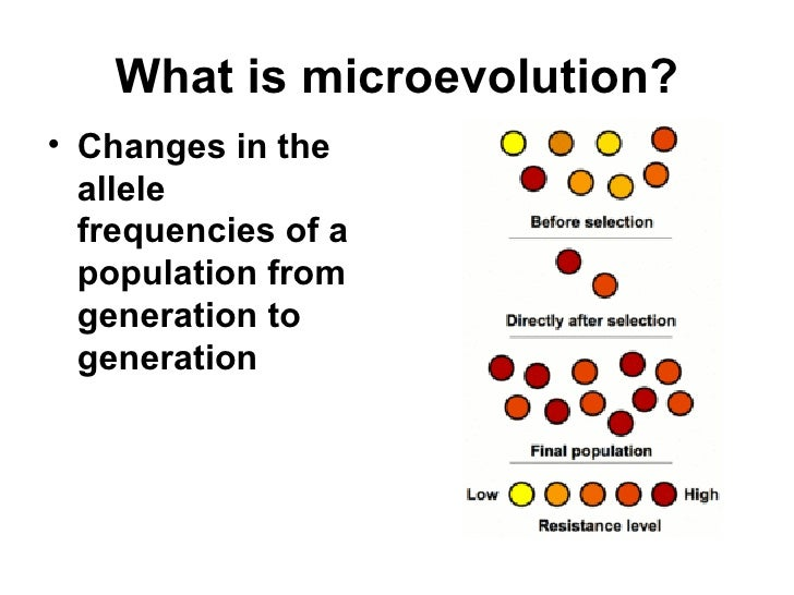 chapter 23 the evolution of populations Download and read chapter 23 the evolution of populations answers chapter 23 the evolution of populations answers when there are many people who don't need to expect something more than the benefits to take, we will suggest.
