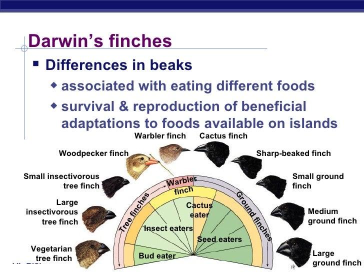 AP Biology - Charles Darwin