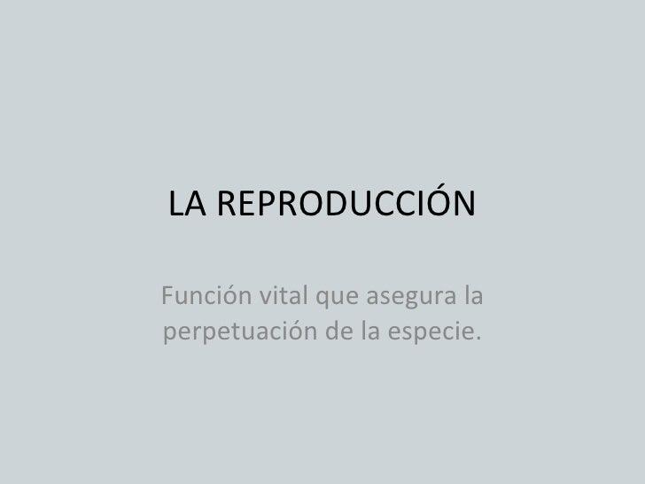 Ap. reproductor