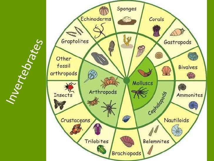Ap 11 invertebrates
