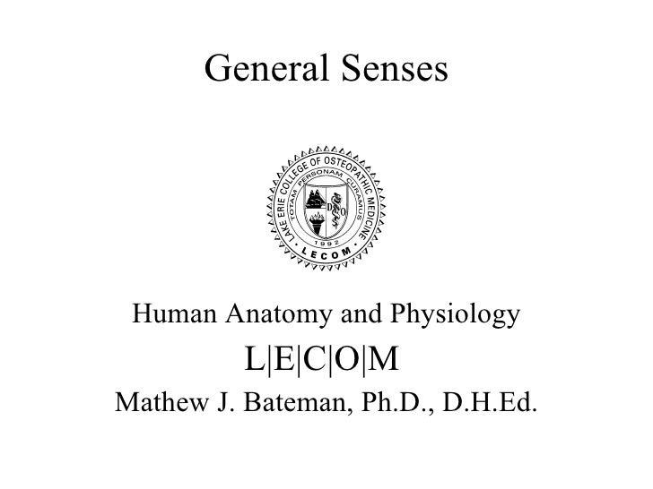 A&p 20 general sense