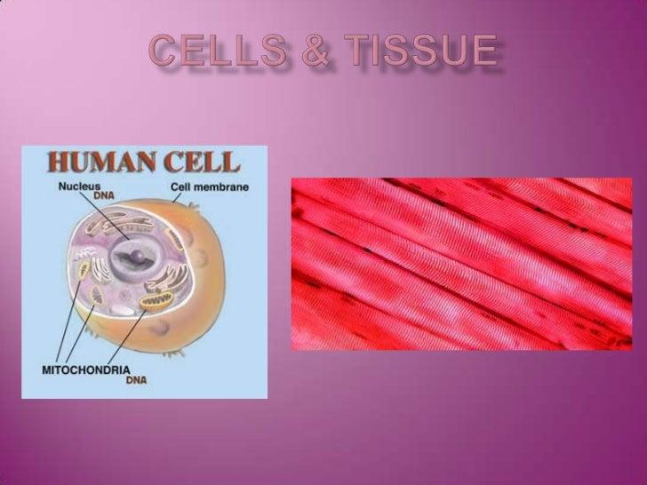 Cells & tissue<br />