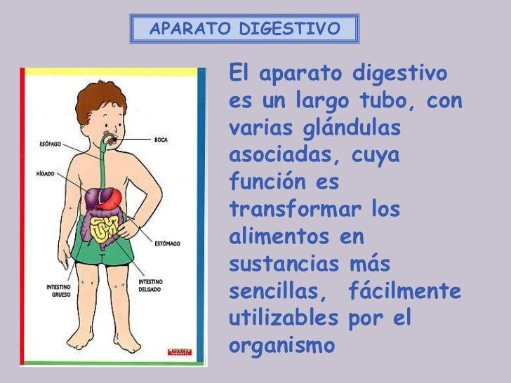 APARATO DIGESTIVO       El aparato digestivo       es un largo tubo, con       varias glándulas       asociadas, cuya     ...