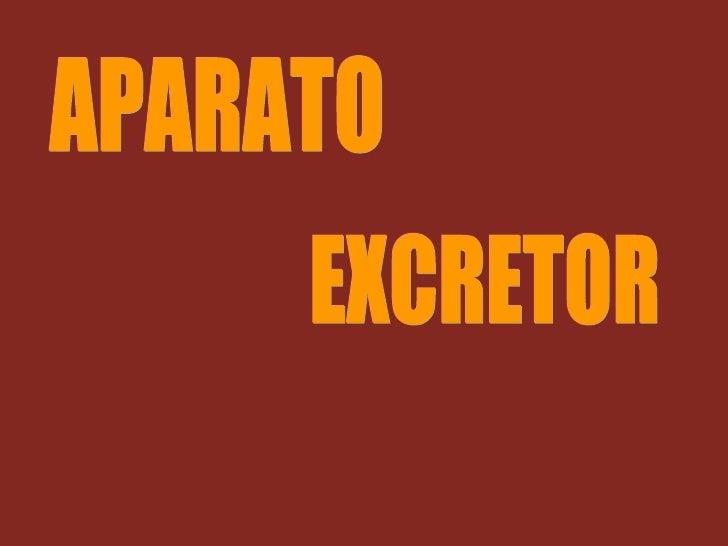 APARATO EXCRETOR, Leones