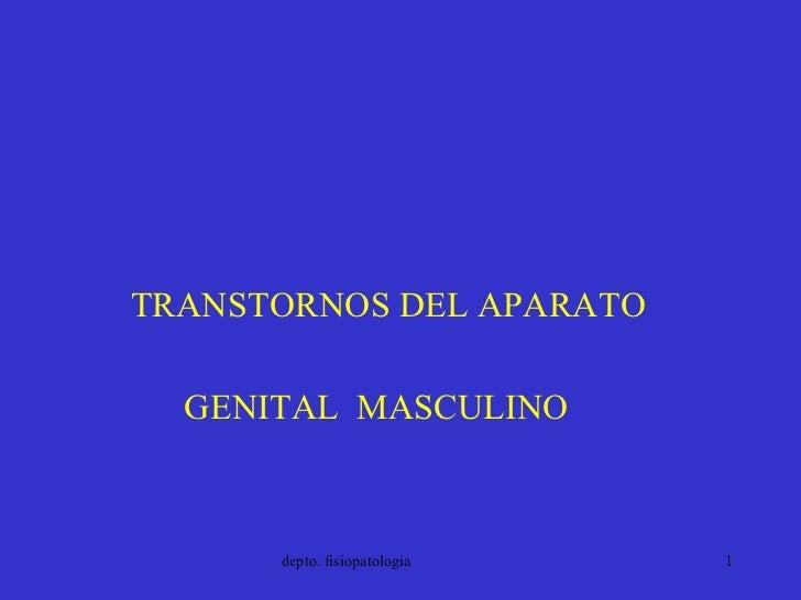 <ul><li>TRANSTORNOS DEL APARATO </li></ul><ul><li>GENITAL  MASCULINO </li></ul>