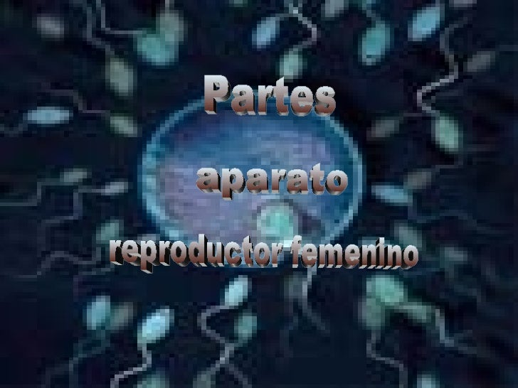 Partes aparato reproductor femenino