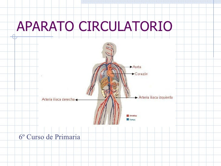 APARATO CIRCULATORIO 6º Curso de Primaria