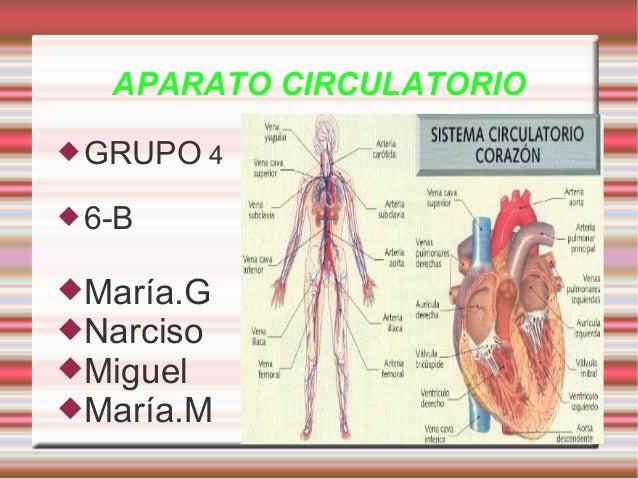 APARATO CIRCULATORIO GRUPO 4 6-B María.G Narciso Miguel María.M