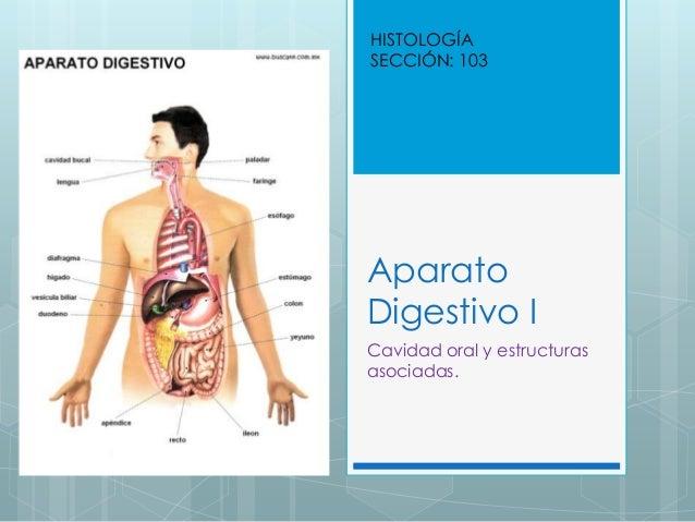HISTOLOGÍA SECCIÓN: 103  Aparato Digestivo I Cavidad oral y estructuras asociadas.