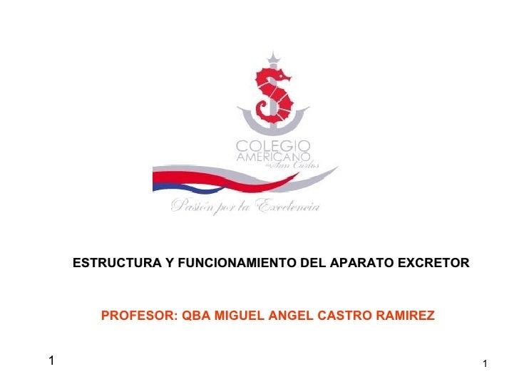 1 ESTRUCTURA Y FUNCIONAMIENTO DEL APARATO EXCRETOR PROFESOR: QBA MIGUEL ANGEL CASTRO RAMIREZ