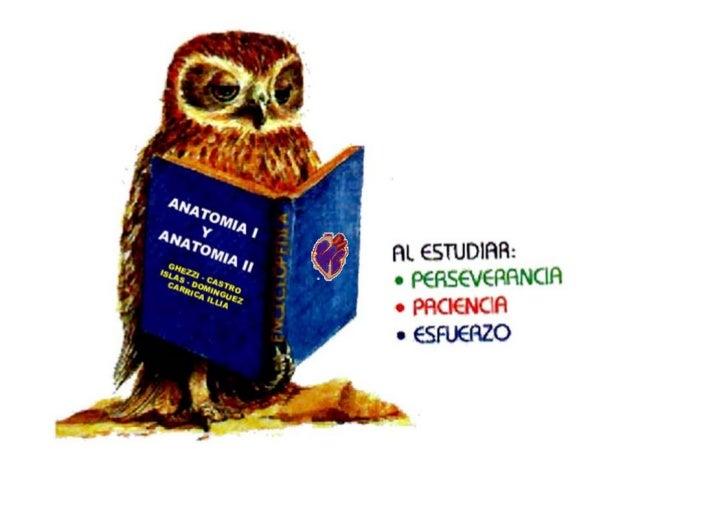 Departamento de Ciencias Biológicas                Área ANATOMIA IIAREA DE ANATOMIA DE LOS ANIMALES DOMESTICOSMARCELO GHEZ...