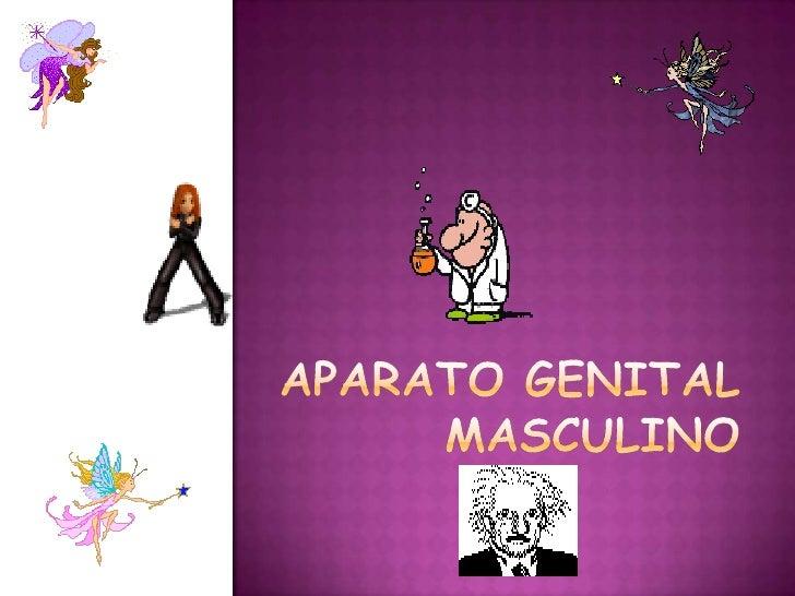 APARATO GENITAL MASCULINO <br />