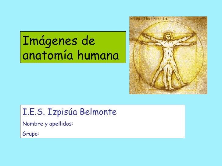 Imágenes de anatomía humana I.E.S. Izpisúa Belmonte Nombre y apellidos: Grupo:
