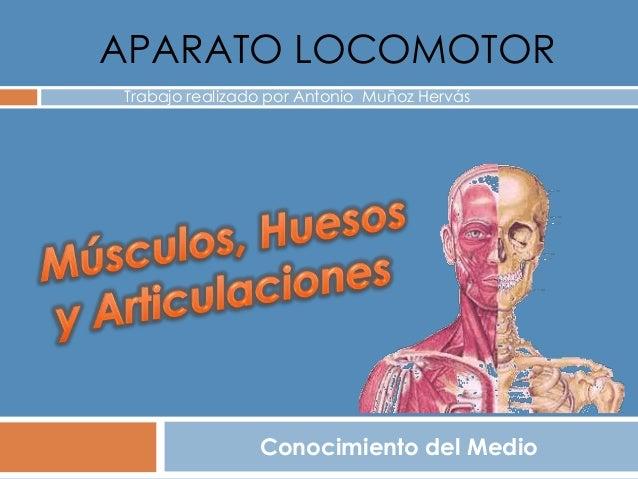 APARATO LOCOMOTOR Conocimiento del Medio Trabajo realizado por Antonio Muñoz Hervás