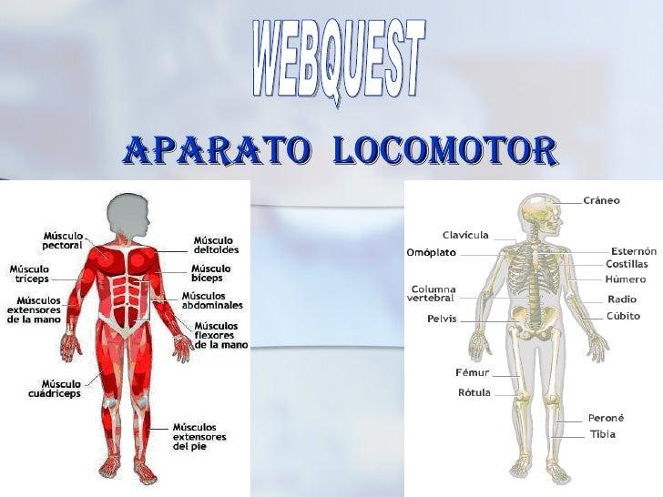 APARATO  LOCOMOTOR WEBQUEST