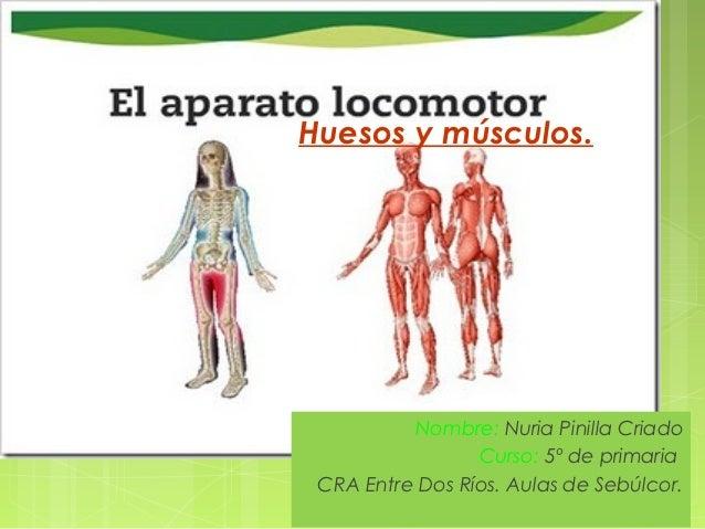 Huesos y músculos.          Nombre: Nuria Pinilla Criado                 Curso: 5º de primaria CRA Entre Dos Ríos. Aulas d...