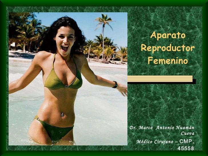 Aparato Reproductor Femenino Dr. Marco  Antonio Huamán Cueva Médico Cirujano –  CMP. 45558