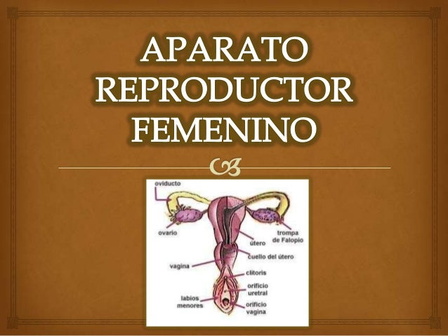 Aparato reproductor femenino exposicion