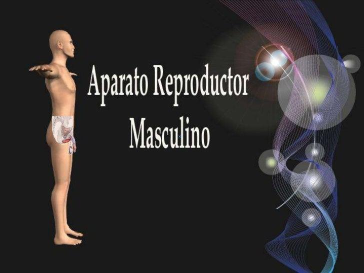 Aparato Reproductor Masculino                   Se divide en dos    Aparato                                Aparato genital...